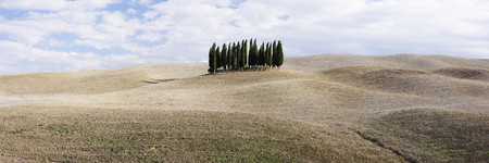 Cypress Trees LANG_EVOIMAGES