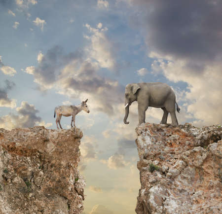 Donkey and elephant separated by gap in cliff