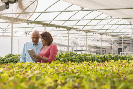 Couple reading clipboard near green plants in greenhouse LANG_EVOIMAGES