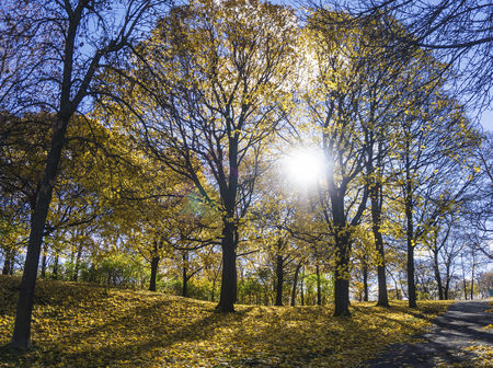 Trees in park on sunny day