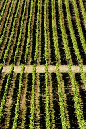 Aerial view of tree farm Banco de Imagens - 102038061