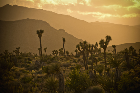 Cactus in desert landscape at sunset LANG_EVOIMAGES