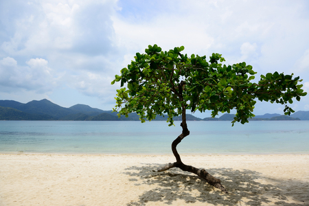 south east asia: Trees along the sea beach in south east asia. Stock Photo