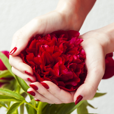 womans hands: Womans hands holding red flower Stock Photo