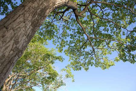 hardwood: Curve of hardwood tree Stock Photo