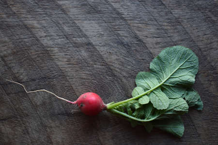 a fresh radish on wood