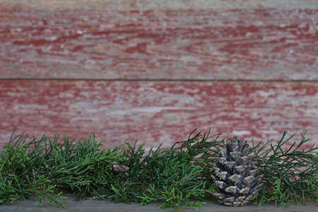 pine cone with a red barn board background