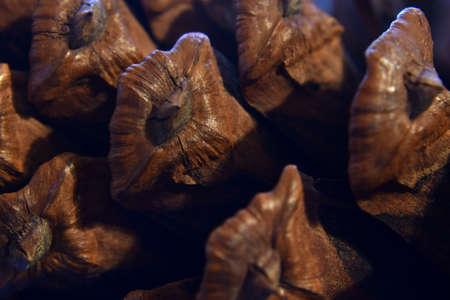 macro of a pinecone