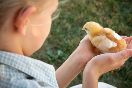 a child holding a chick