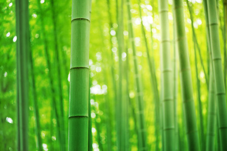 Bamboe bos, toerisme naar Japan Stockfoto