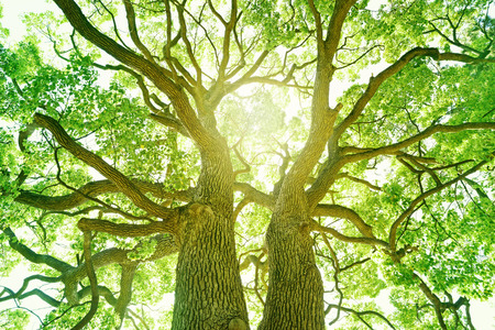 environmental issue: Big tree in a forest. Fresh green and ecology