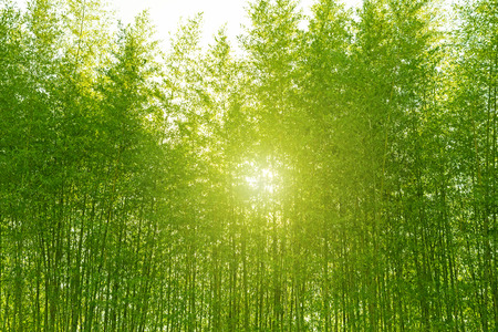 Bamboo forest, Tourism.
