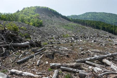 Abattage des forêts, destruction de l'environnement et réchauffement de la planète. Banque d'images