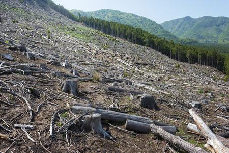 abbattimento della foresta, distruzione ambientale e il riscaldamento globale. Archivio Fotografico