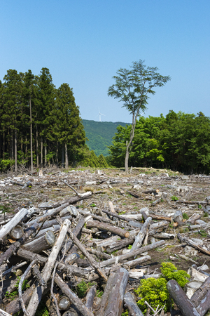 environmental issue: Forest felling, Wind power generation.