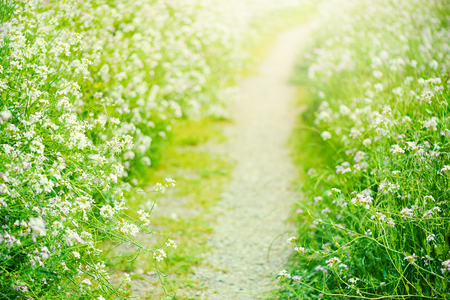 Pathway where flowers bloom,