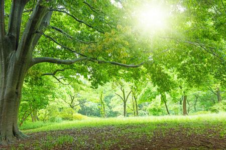 Parque, plantas frescas, paisaje refrescante Foto de archivo