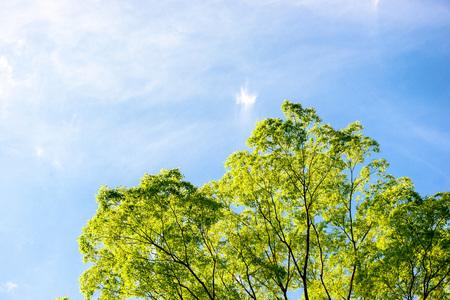 Rbol verde fresco y cielo azul Foto de archivo - 76112431