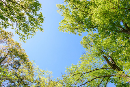 Fresh green tree and blue sky 版權商用圖片
