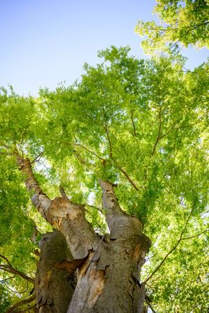 regeneration: Fresh green tree, Stock Photo