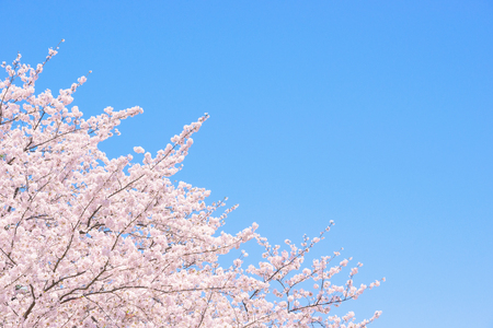 Symbolic Japanese flower trees, and cherry blossoms.