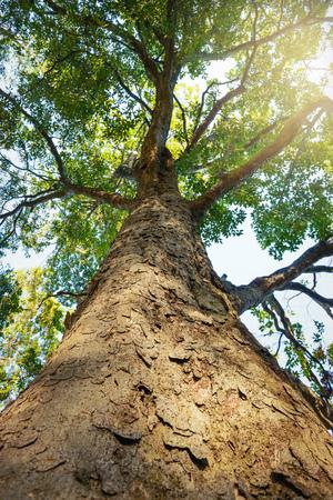 Fresh green tree. Standard-Bild