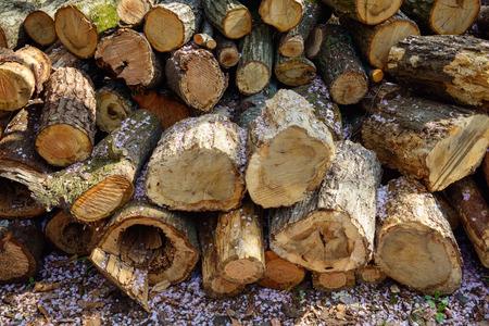 Wood, firewood, cherry blossom petals. Standard-Bild