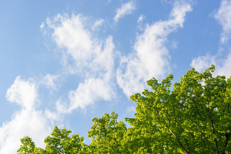 Fresh green trees and blue sky
