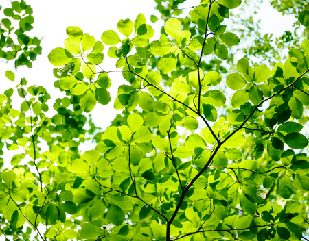Fresh green tree leaves. In the refreshing forest.