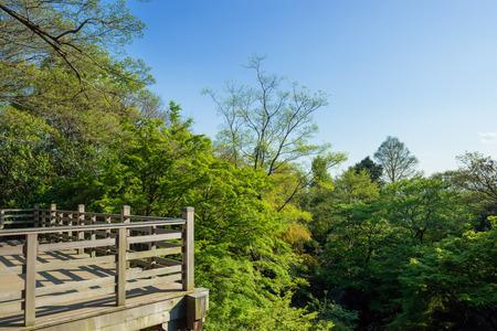 Japanese balcony in the forest Standard-Bild