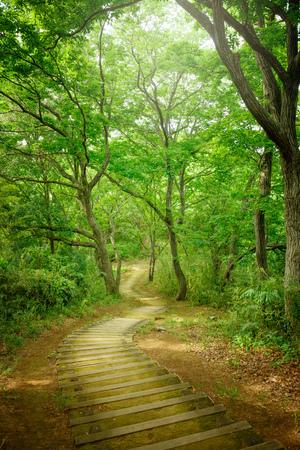 Wandelroutes in het bos Stockfoto