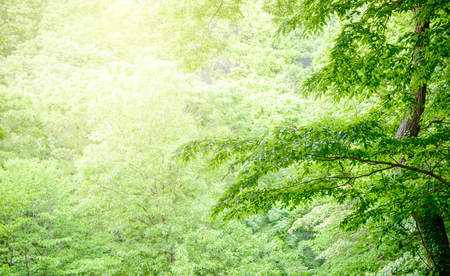 Scenery from the deep forest of Japan