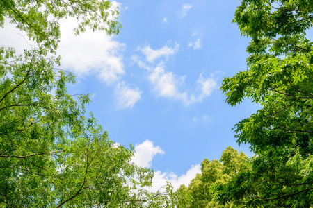 Fresh green trees and blue sky and clouds Фото со стока - 78529642