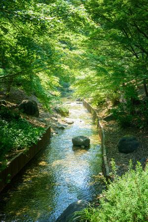 regeneration: Brook of Tokyo