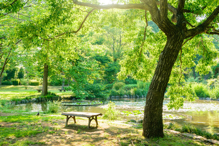 Japanese park with a pond Banque d'images