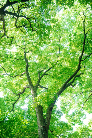 Look up at the trees in the forest