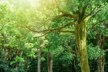 Deep forest in Tokyo