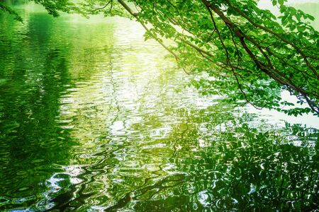 Trees reflecting on the surface of the water
