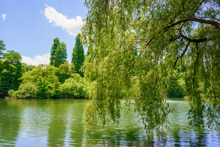 Pond and willow tree