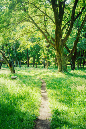 Hiking trails in the forest