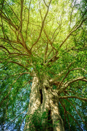 Great evergreens