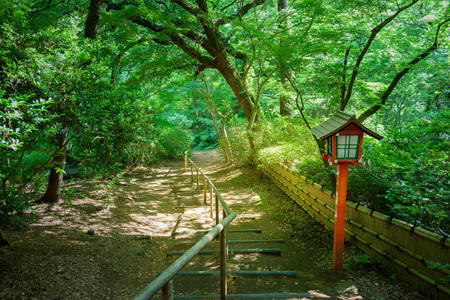 Japanese Forest Path
