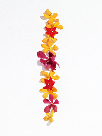 Orchid _