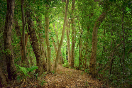 The way to the deep forest
