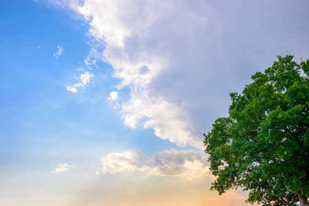Tree and evening rain clouds