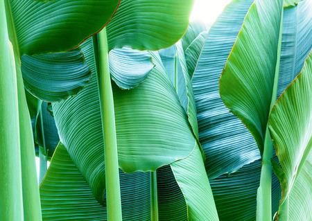 Tropical plant Фото со стока - 81794549