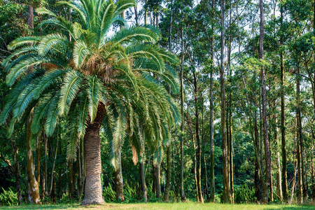 Tropical plant forest