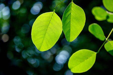 Fresh green leaves. Standard-Bild