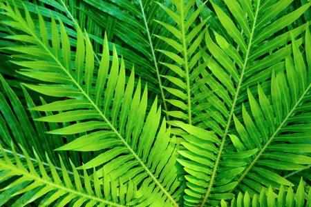Tropical plants. Ferns. Фото со стока - 81794524