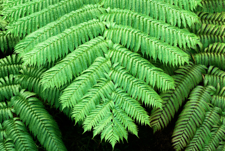 Tropical plants. Ferns.